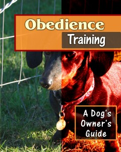 Obedience-FLAT