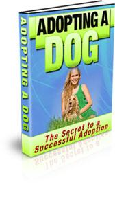 Adopting A Dog