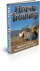 Beginner's Guide to Horse Training