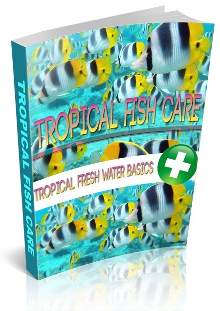 RR Tropical Fish Care
